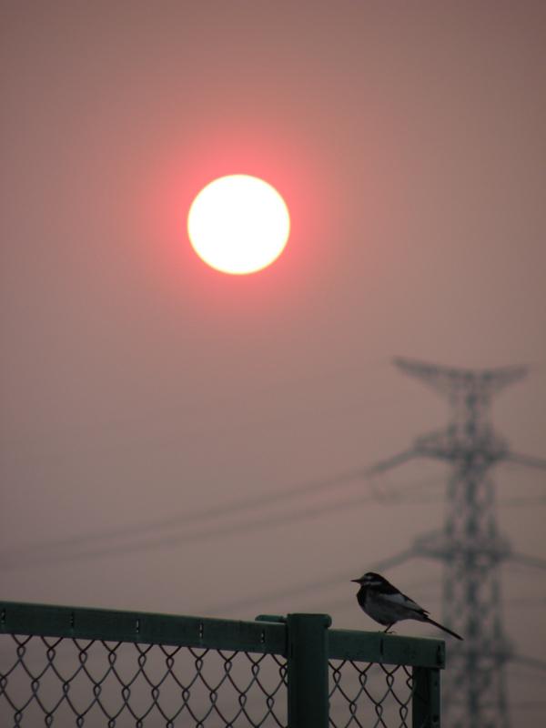 夕陽3.jpg